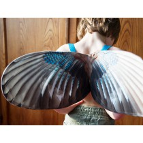Vleugels Jay, Spread your Little Wings